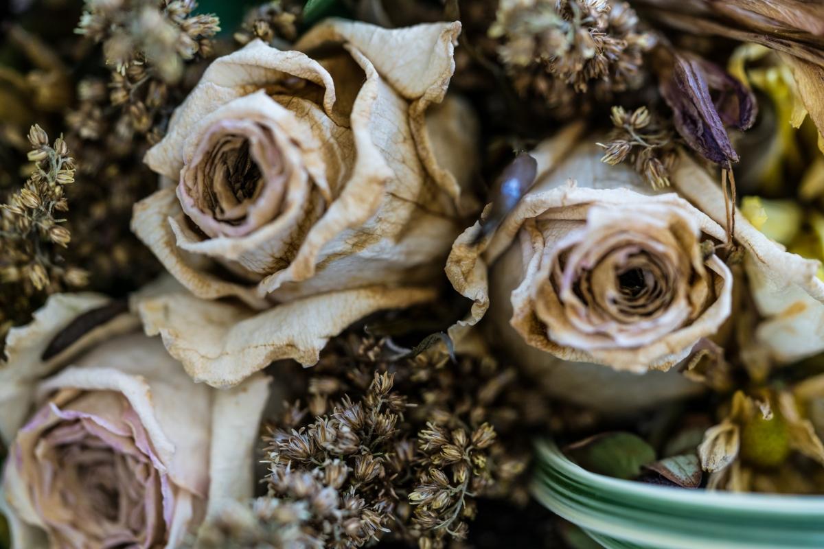 dryingflowers-1